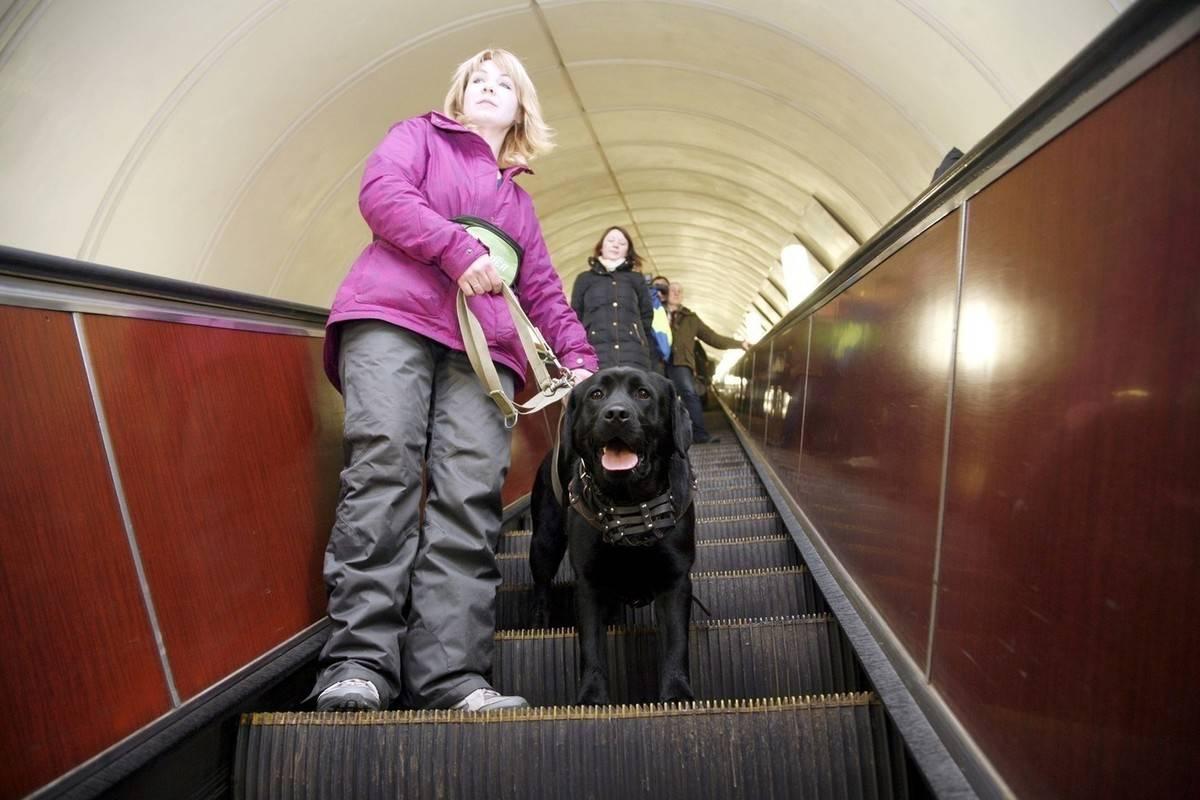 Можно ли с собакой в метро | правила перевозки, москва, санкт-петербург, как перевозить