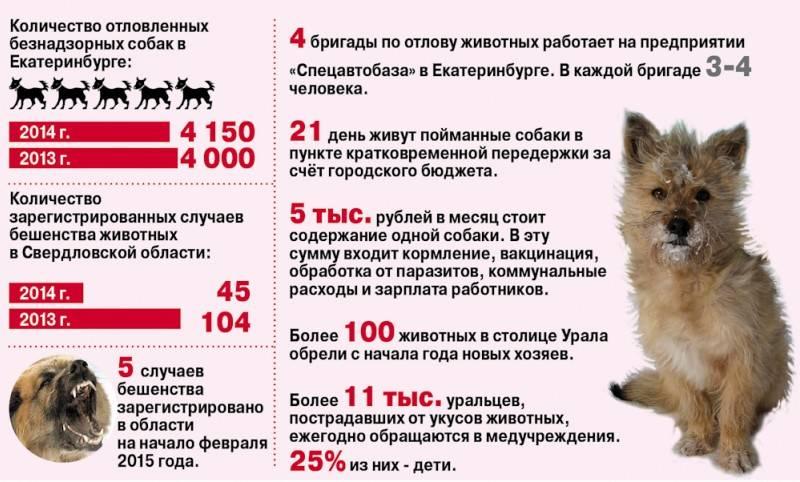 Укусила собака: что делать и куда обращаться, жалоба на хозяина