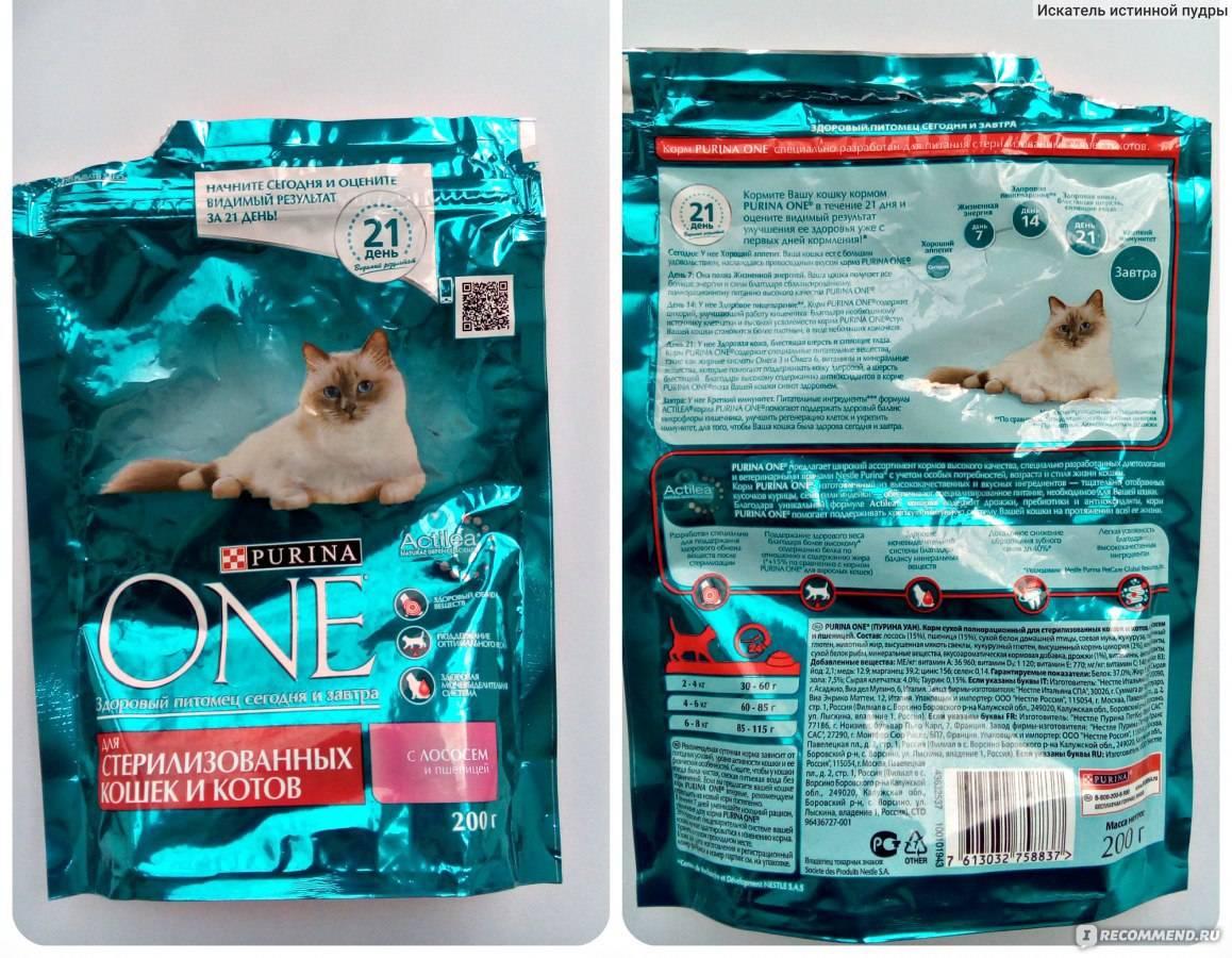 Какой сухой корм для кошек самый лучший по мнению ветеринаров? рейтинг 2021