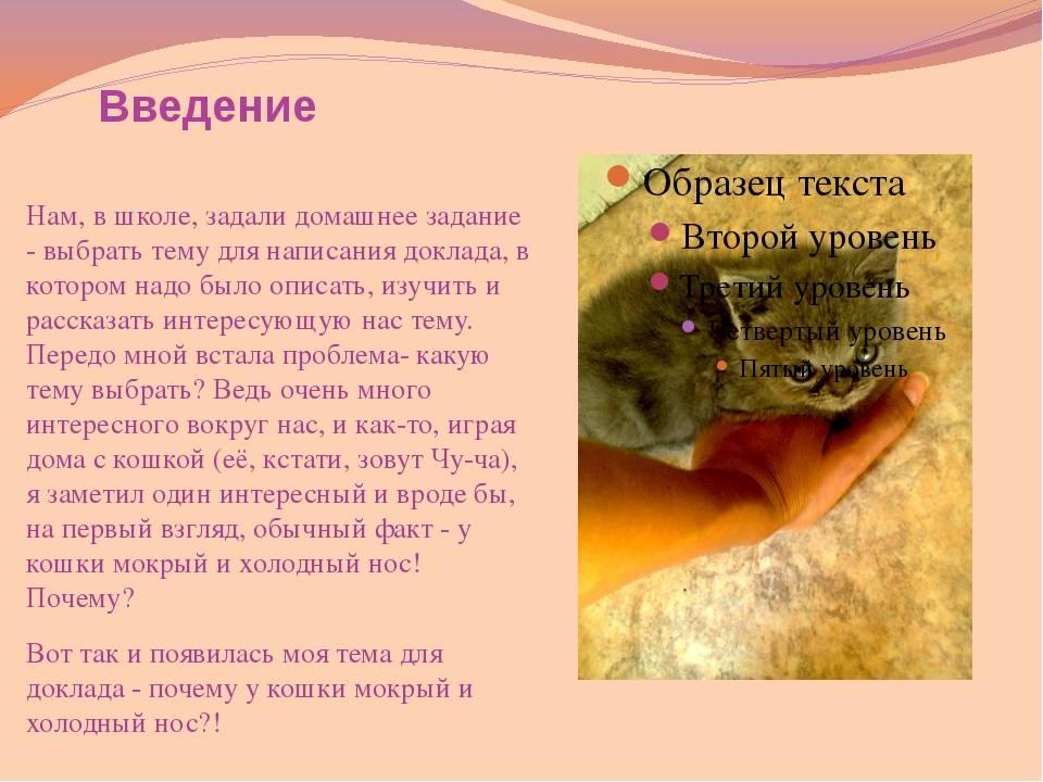 Почему у кошки или кота мокрый нос: причины сырого и холодного носа