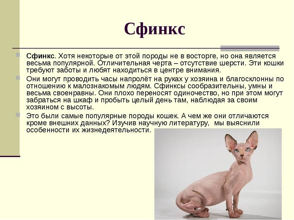 Самые злые кошки - характеристика пород и виды кошачьей агрессии