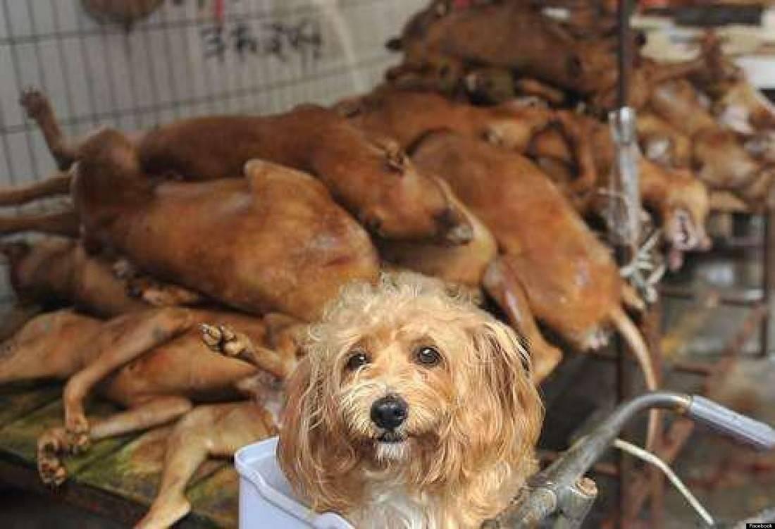 Не все корейцы едят собак