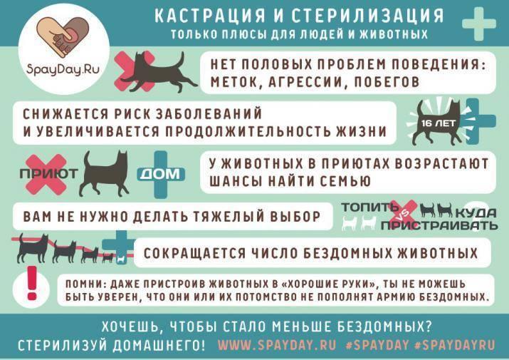 """Обезвоживание у кошек - причины, симптомы, лечение обезвоживания у котов в москве. ветеринарная клиника """"зоостатус"""""""