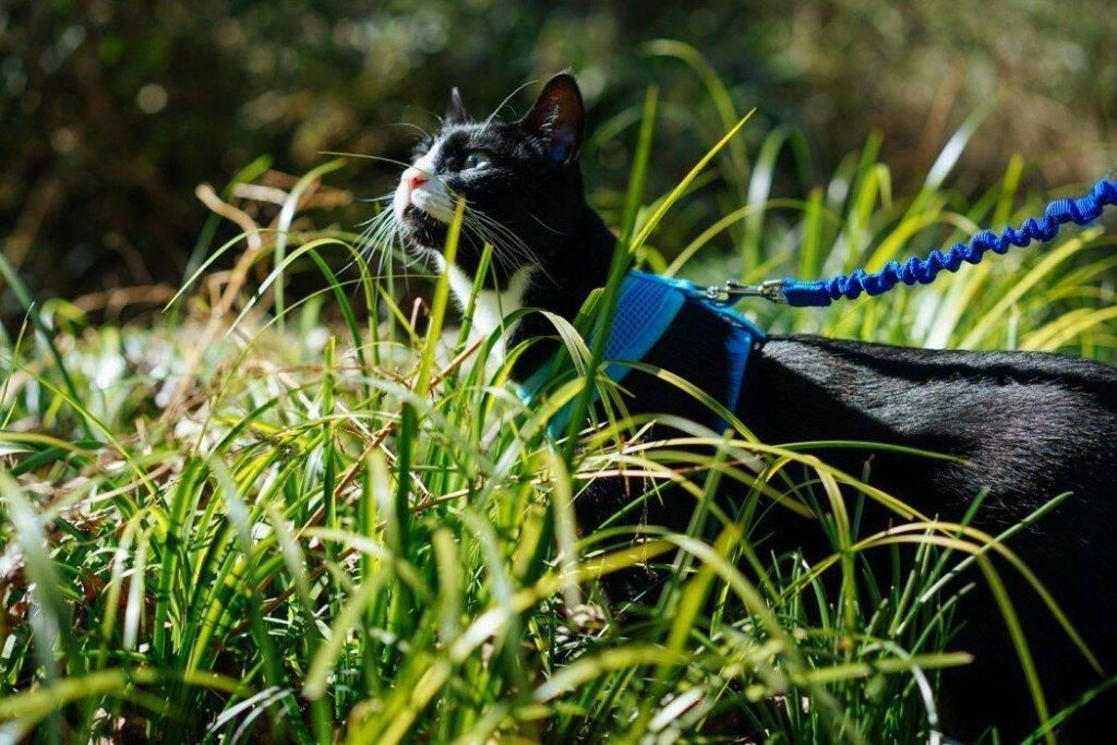 Как отучить кошку от улицы: всего 4 шага к успеху