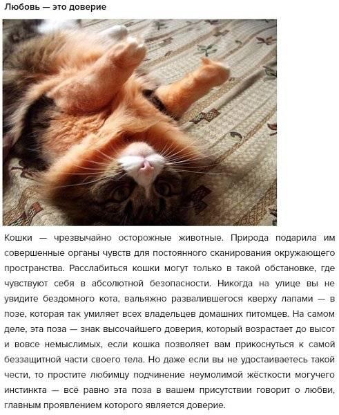 Как понять, что кот расстроен и что он обиделся на меня: признаки недовольства животного
