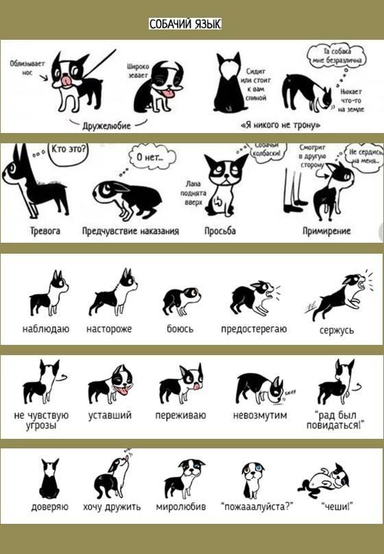 Язык кошек: как человеку понять, что говорит кот, есть ли переводчик на кошачий, специальный словарь или разговорник