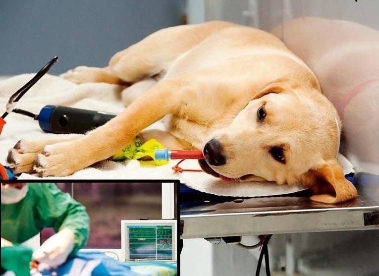 Эндокринная патология - гипотиреоз собак