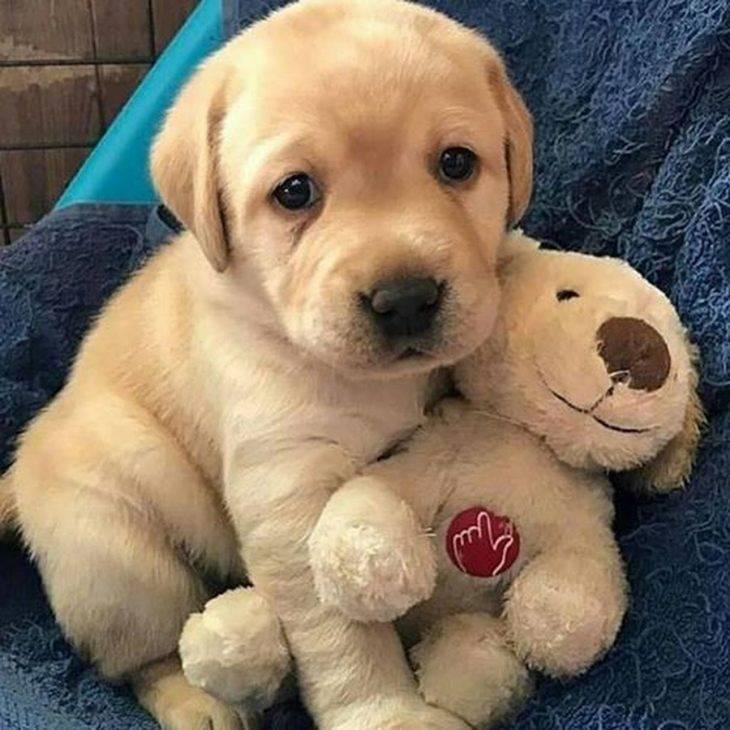 Клички для лабрадора мальчика и девочки: как назвать щенка