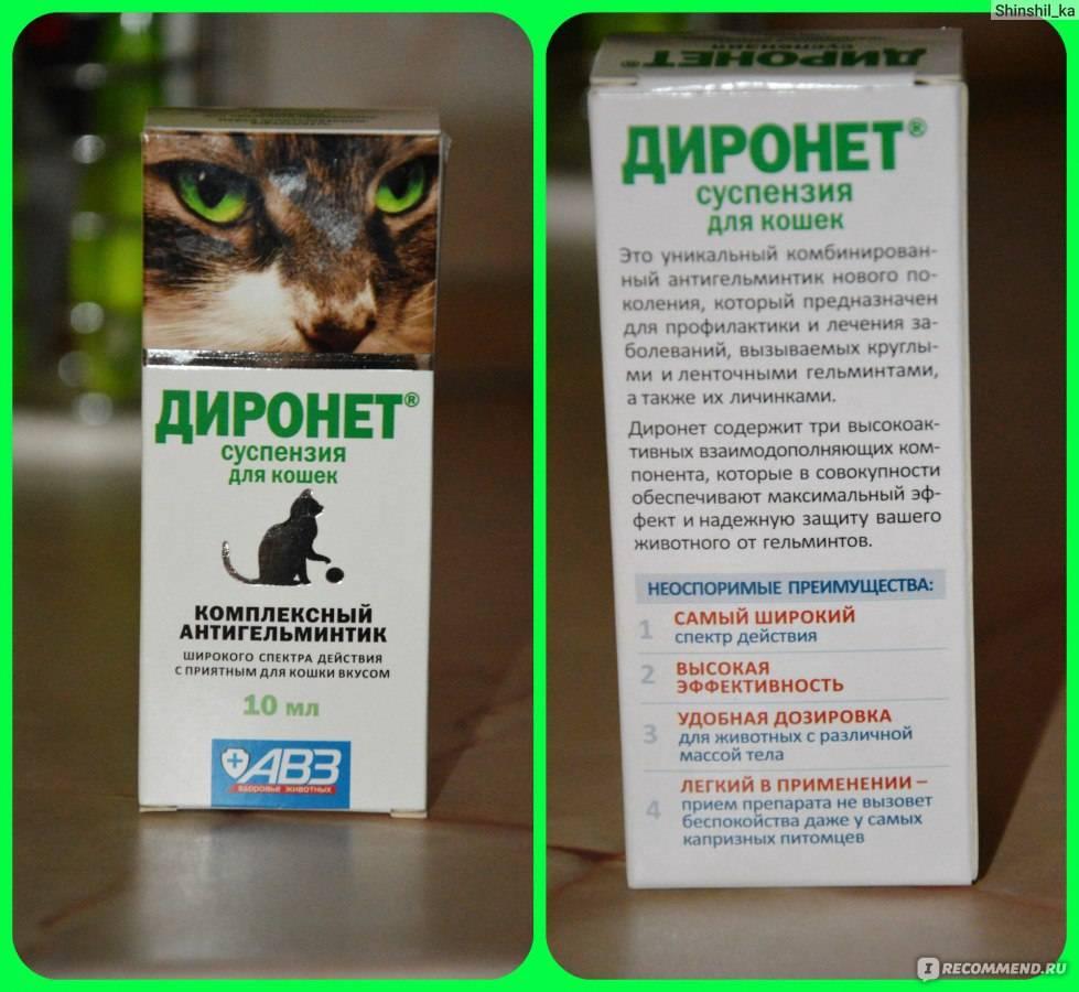 Обезболивающие для кошек: какое можно дать