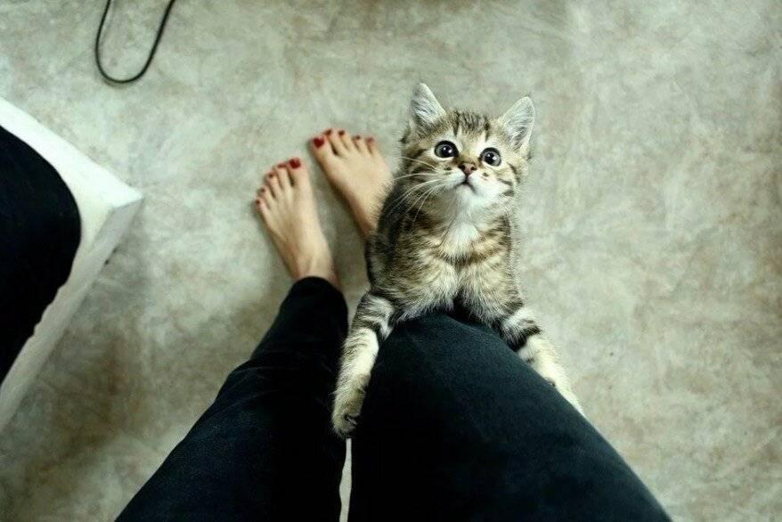 Люди говорят, что их кошка или кот понимает человеческий язык – правда ли, что кошки и коты понимают человека и речь людей?