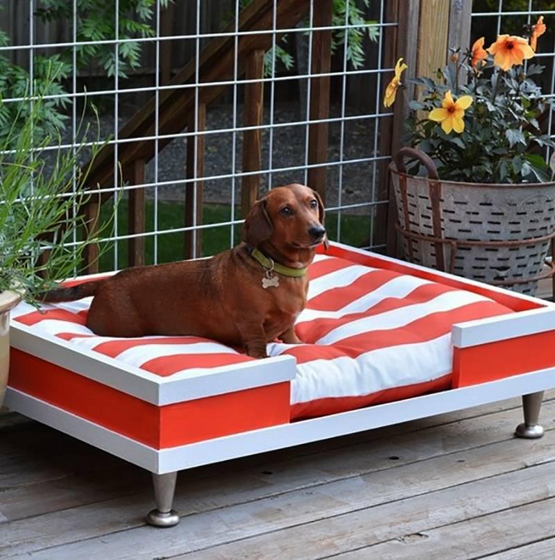 Как не подпускать собаку к мебели | мебель для дома и офиса на heaven-house.ru