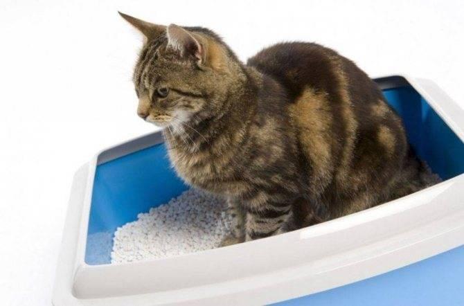 Почему кошка перестала ходить в лоток: 8 причин и способы их устранения
