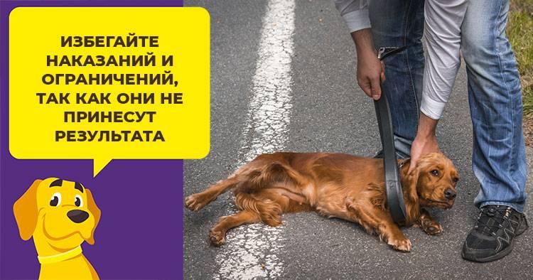 Вы знаете почему собака бегает за своим хвостом?