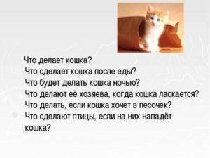 Как кошка переносит котят