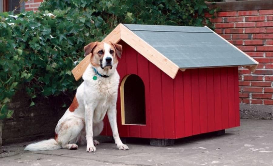 Как приучить собаку к будке, если она отказывается там спать? как перевести собаку из квартиры на улицу и приучить к конуре?