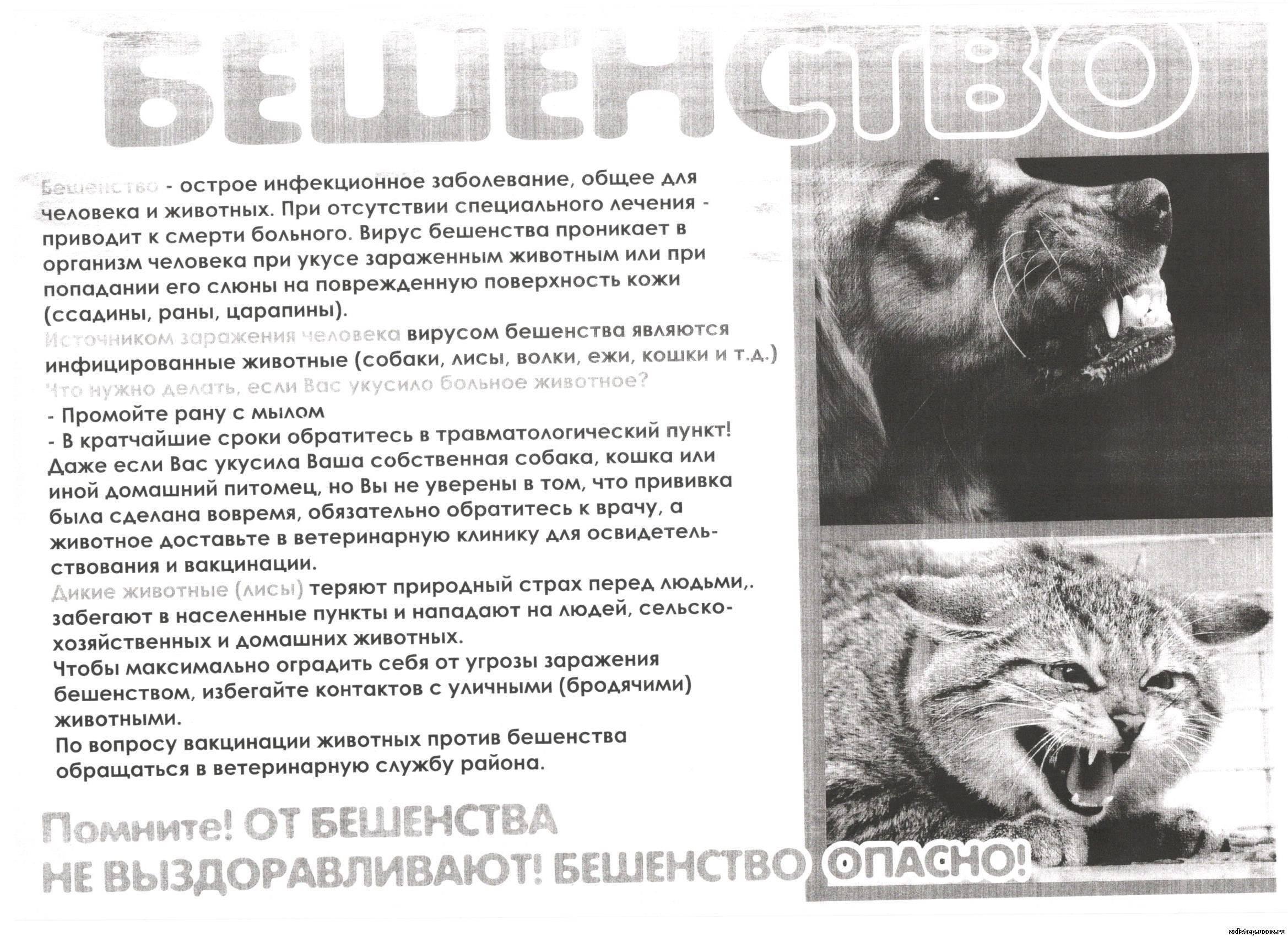 Бешенство у кошек - симптомы, опасность, инкубационный период, лечение, профилактика