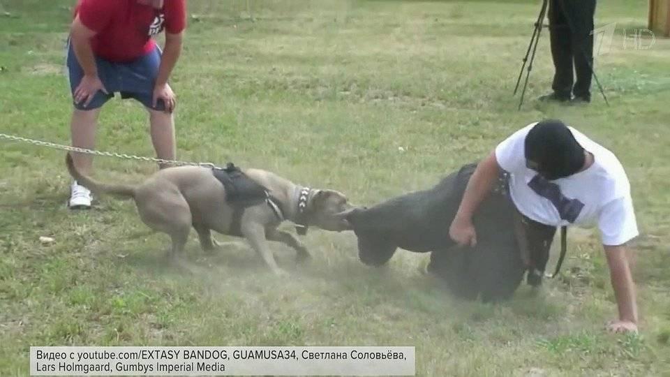 Перечень опасных собак сократили до двенадцати пород