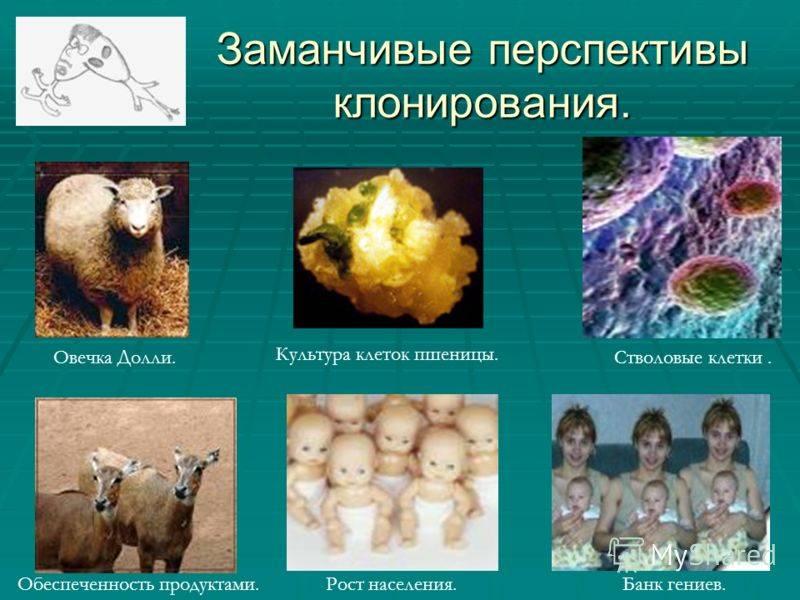 Что изменилось в мире клонирования со времён овечки долли - лайфхакер