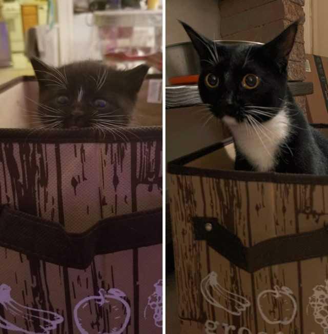 Как подружить двух котов на одной территории