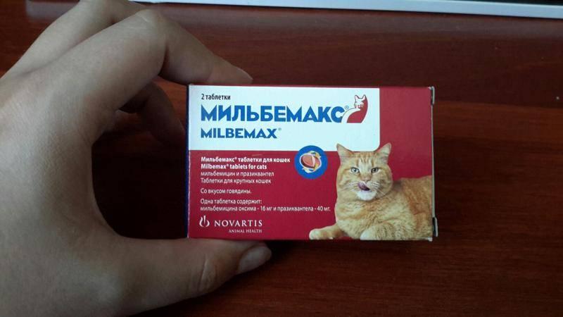 Как правильно дать кошке жидкое лекарство из шприца видео как давать коту лекарство через пасть как давать суспензию от глистов котенку