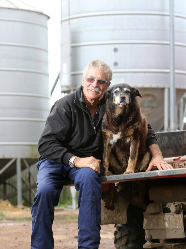 Самая старая собака в мире: продолжительность жизни рекордсменки