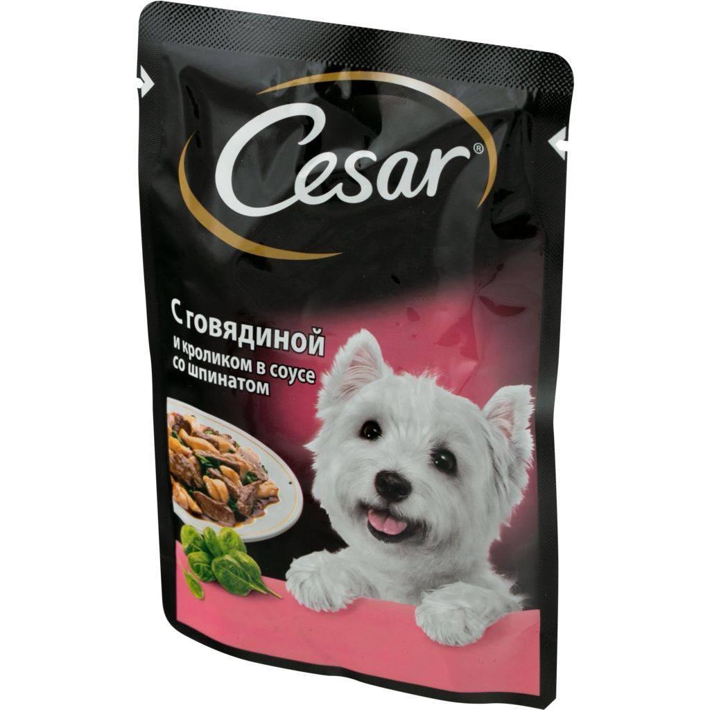 Характеристика корма cesar для собак, его разновидности и мнение экспертов