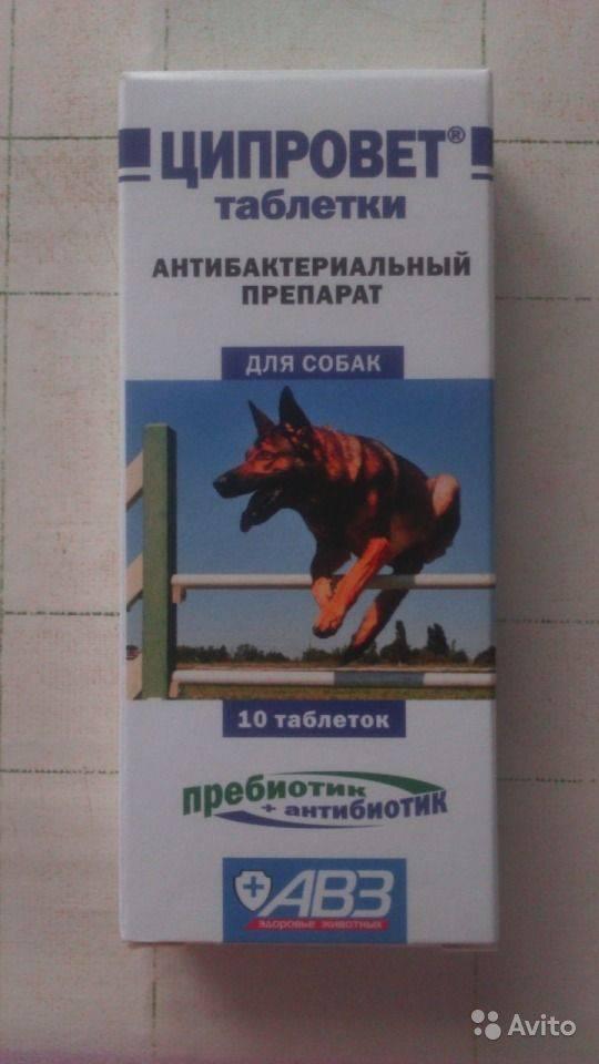 Ципровет для собак – антибиотик № 1
