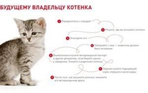 Как дать кошке таблетку: 4 простых способа