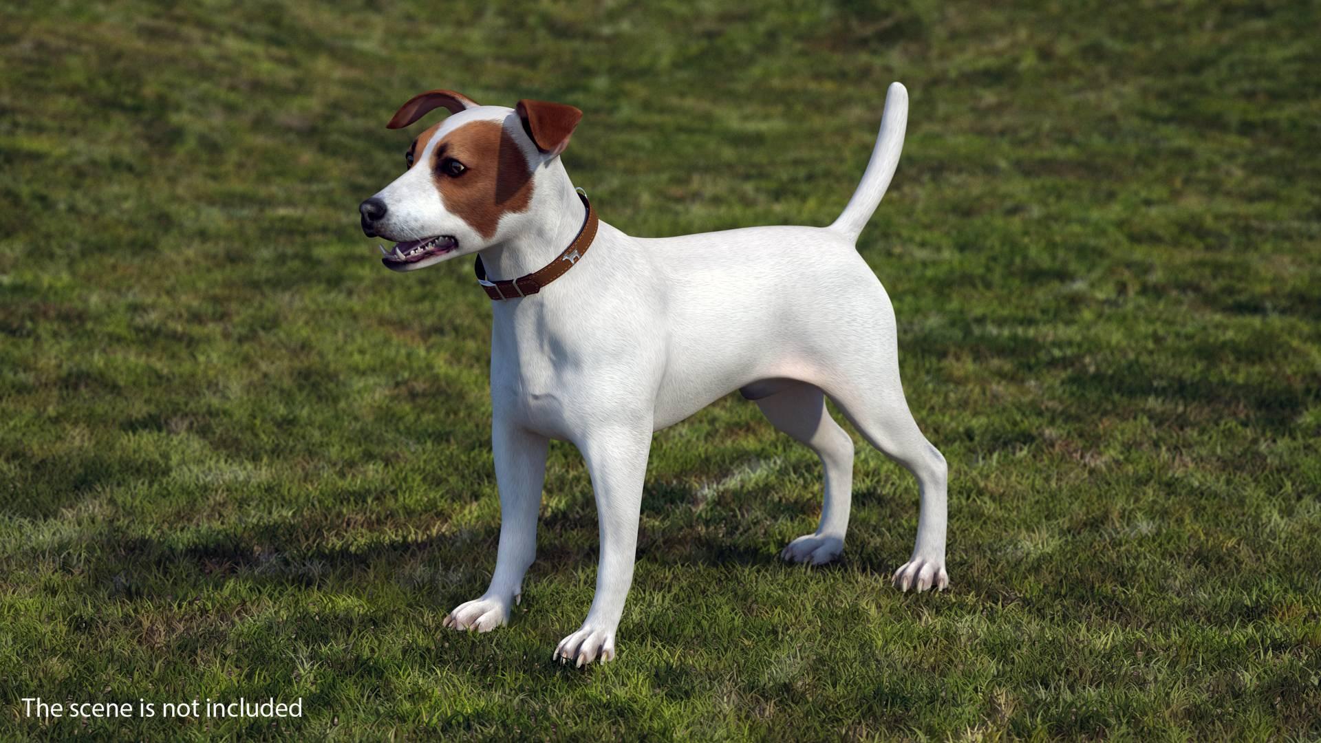 Парсон рассел терьер собака. описание, особенности, уход и цена парсон рассел терьера | животный мир