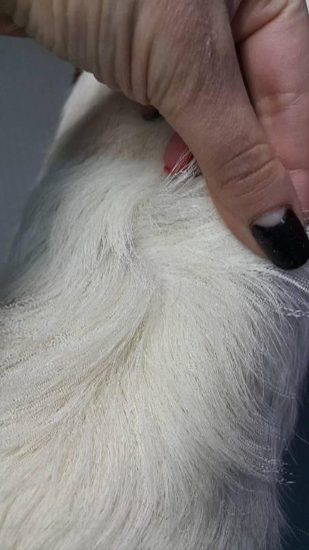 Как зависит состояние шерсти от питания собаки