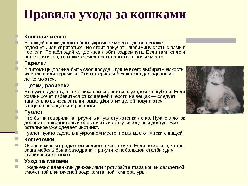 Как приучить котёнка к когтеточке — точим когти с удовольствием