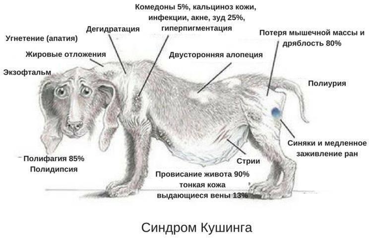 Болезни межпозвонковых дисков у собак