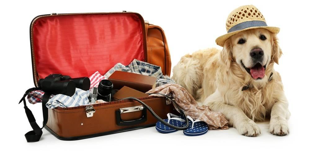 Где оставить кота на время отпуска в москве?