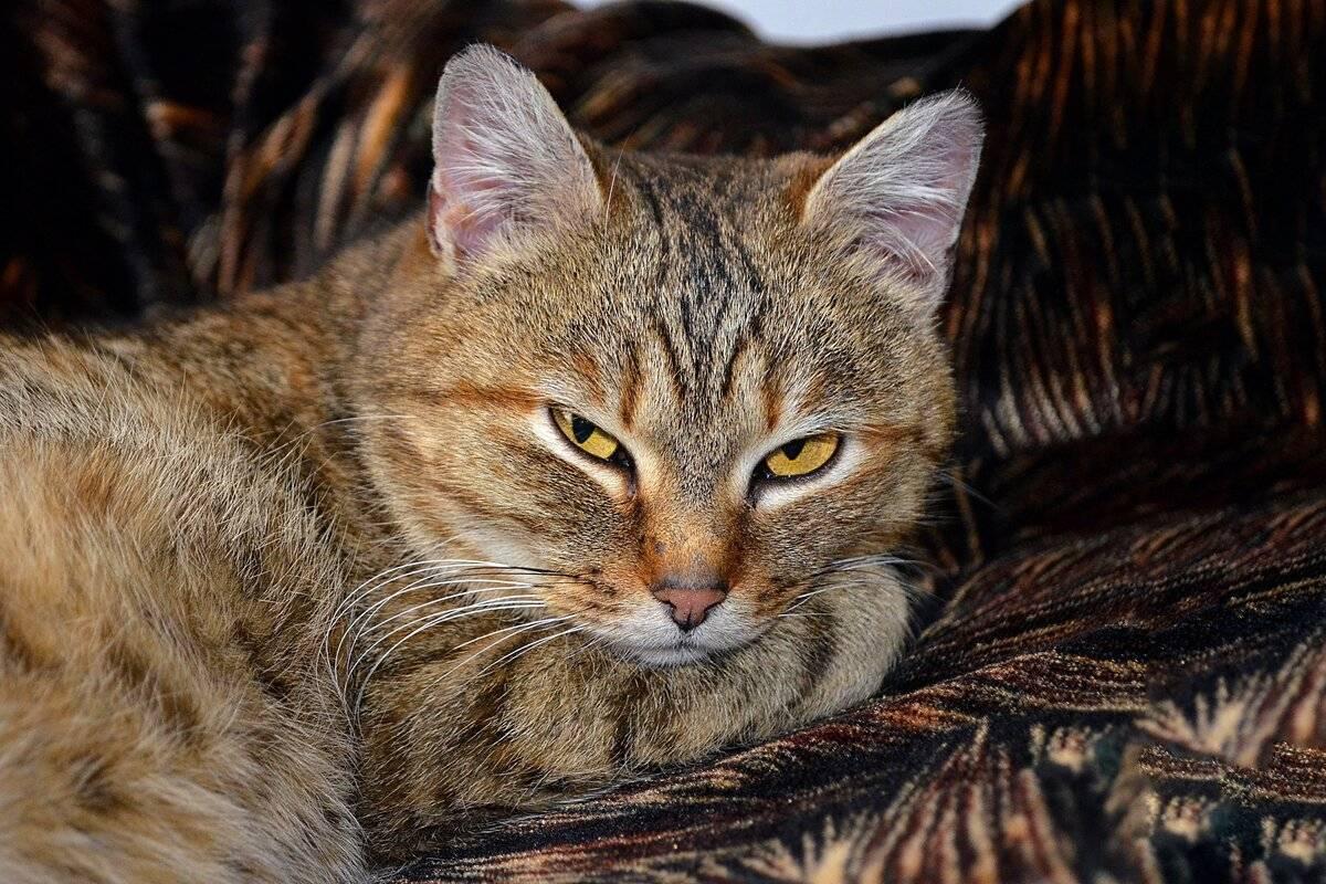 Можно ли бить кошку в целях воспитания