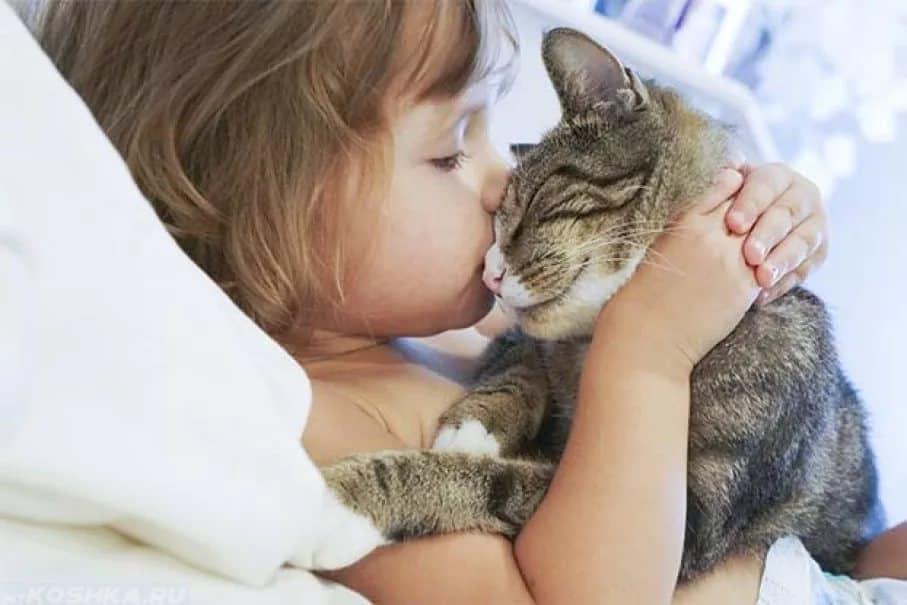Почему нельзя целовать кошек? в чем кроется опасность?