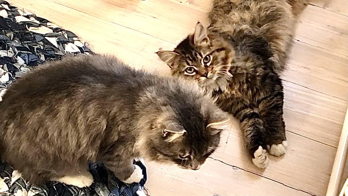 Фото и видео котят | милые, красивые, смешные, котенок