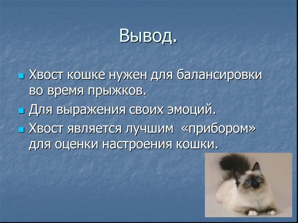 Зачем кошке нужен хвост?