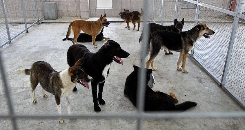 Куда деть собаку, если она не нужна: гуманные способы избавления от собаки, возможность найти новых хозяев