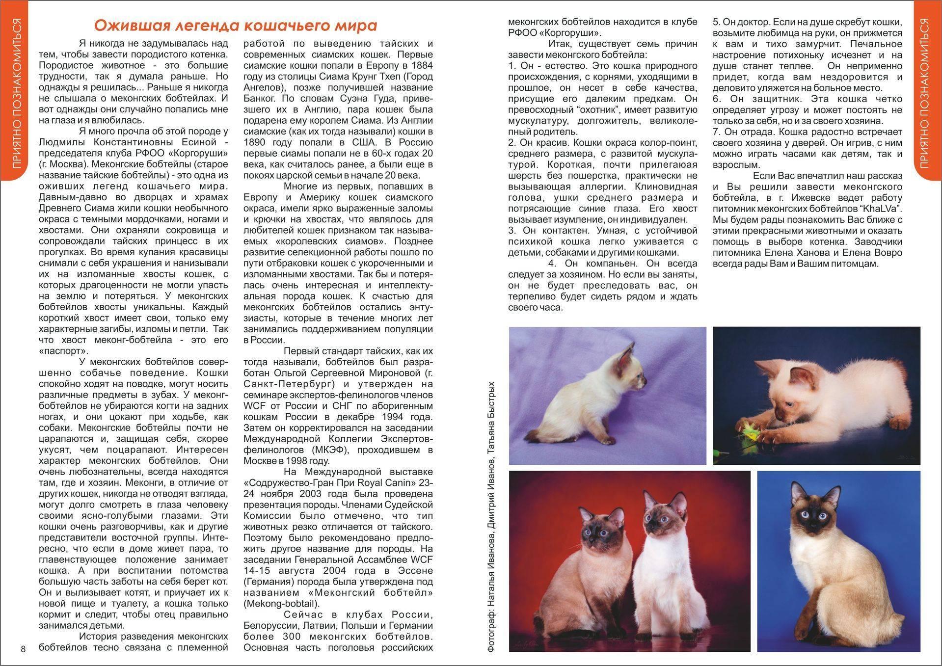 Меконгский бобтейл, тайские и сиамские кошки бобтейлы