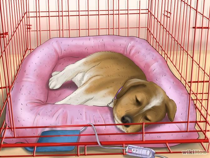 Щенок скулит по ночам, будит, лает, как приучить щенка спать ночью