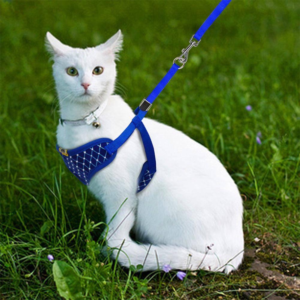 Как из веревки сделать шлейку для кошки своими руками