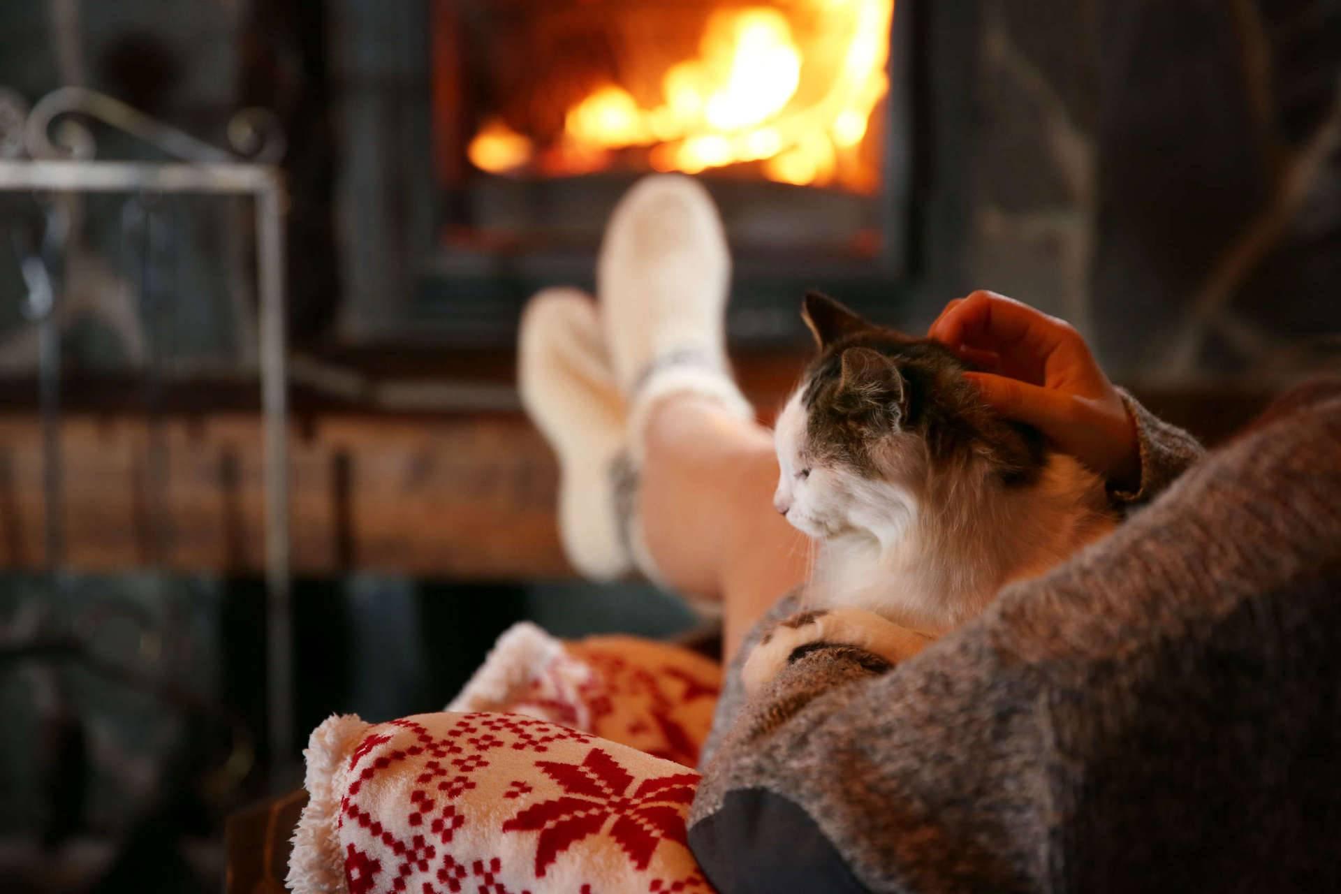 Какую породу кошек выбрать для квартиры и как подружить кошек?