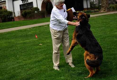 Как отучить собаку прыгать на хозяина и других людей при встрече как отучить собаку прыгать на хозяина и других людей при встрече