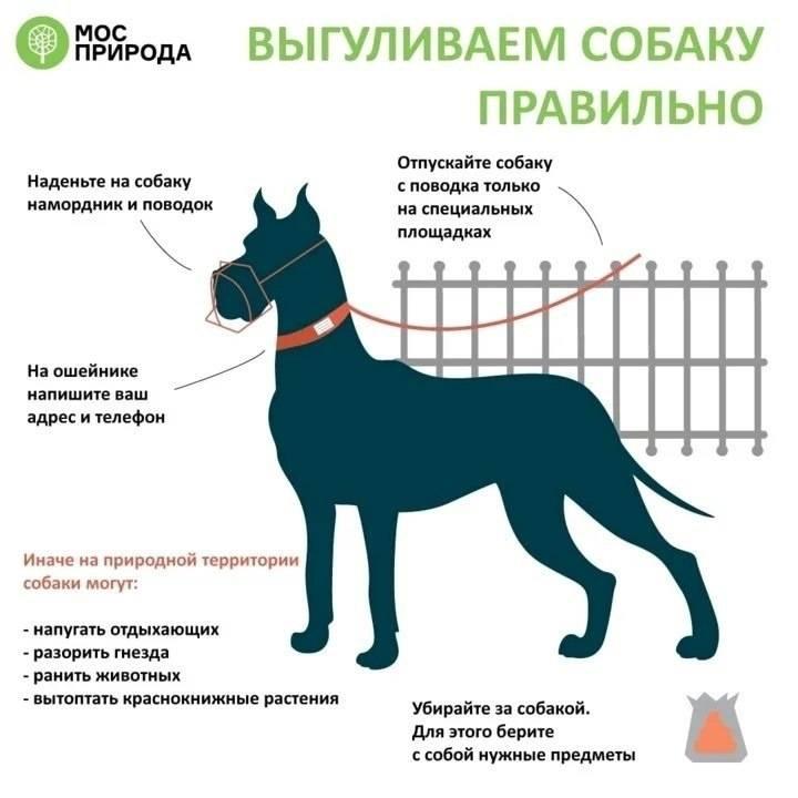 Правила выгула собак в общественном месте — что изменилось?