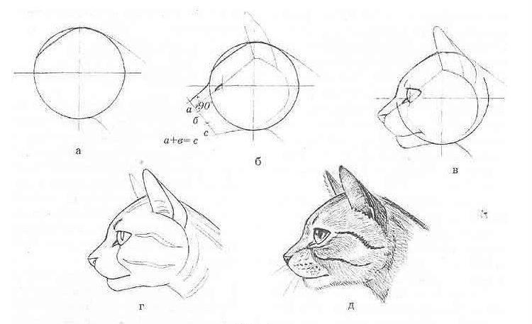 Как нарисовать кошку и кота карандашом поэтапно   для начинающих, рисунок
