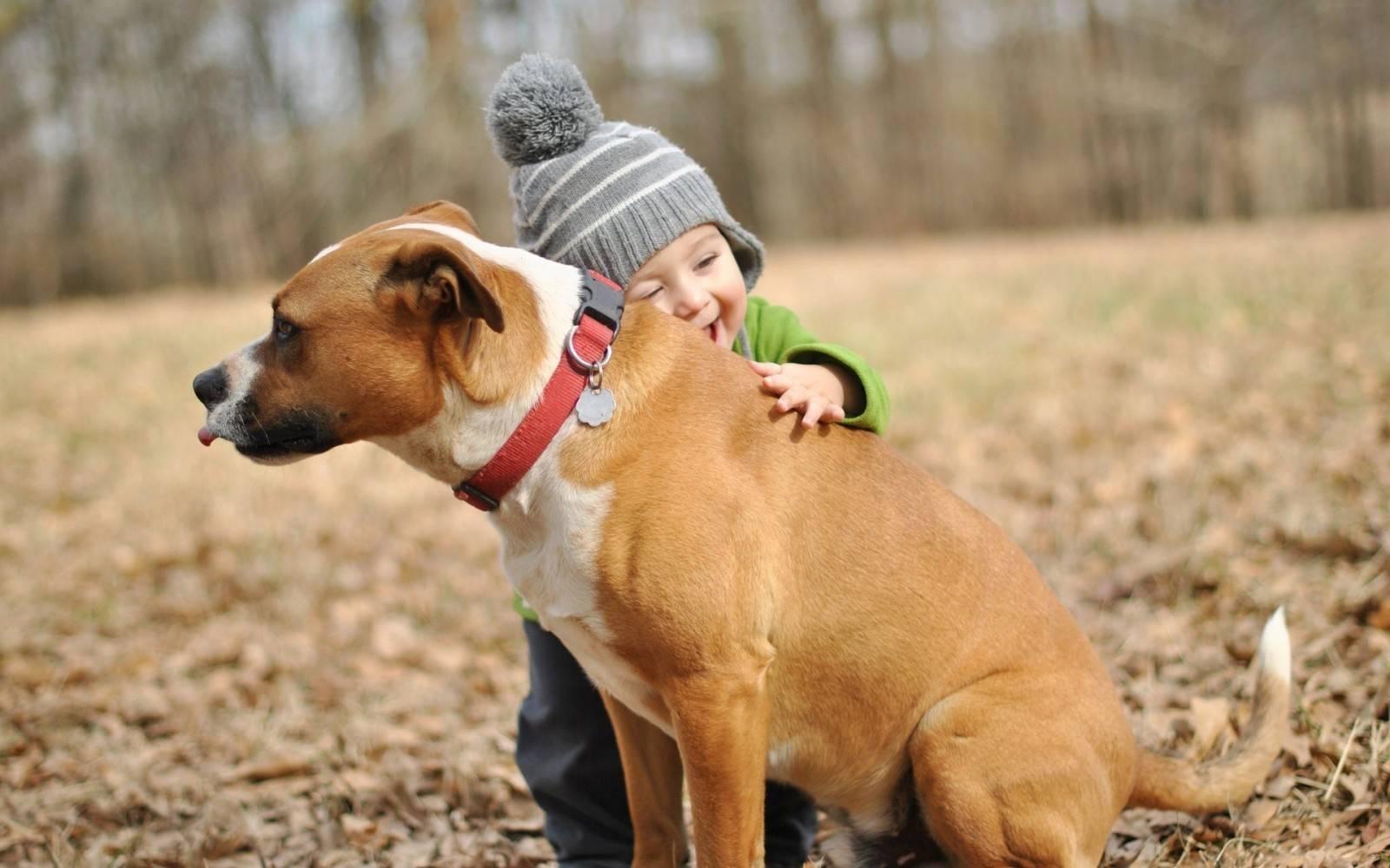Какую породу собаки лучше завести для ребенка в квартиру – плюсы и минусы на портале «хозяйке на заметку»