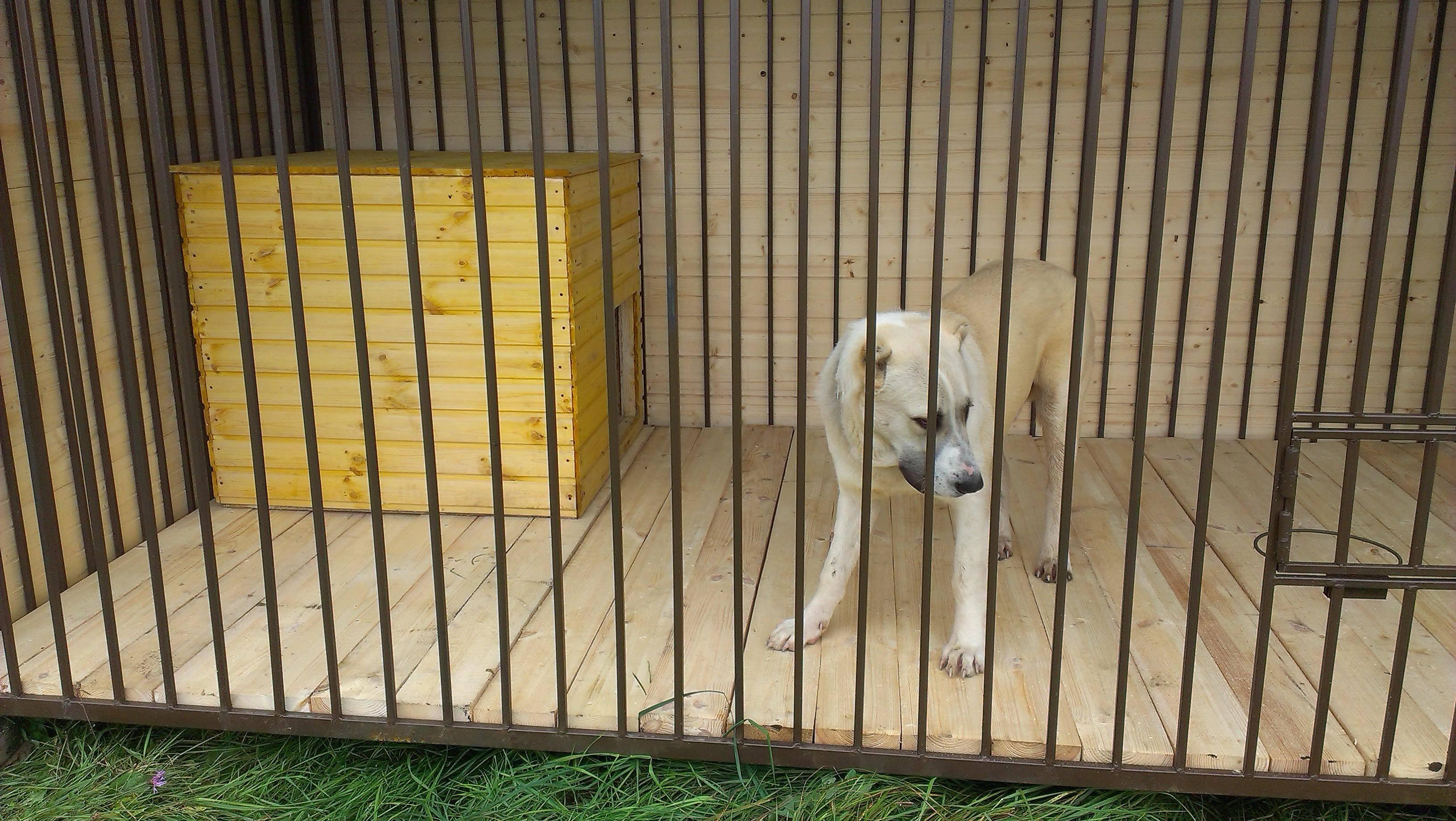 Изготовление вольера, будки и забора собственноручно для собаки породы алабай