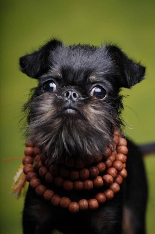 Самые смешные породы собак: фото с названиями