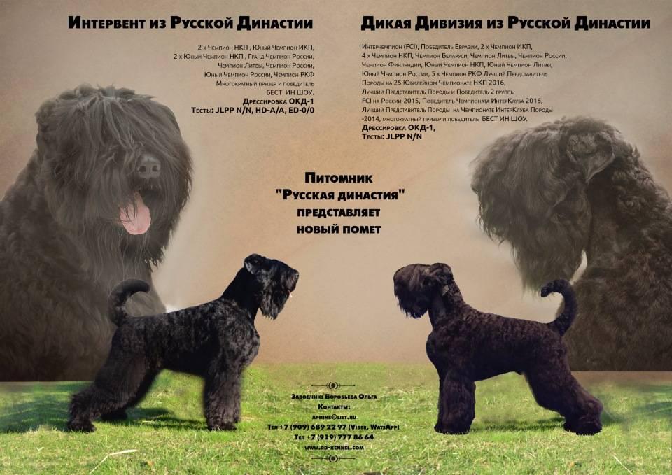 Собака сталина или рчт