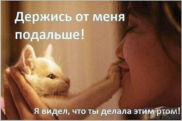 Почему нельзя обнимать котов – причины и последствия